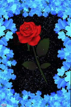 The perfect Blue Flowers Red Animated GIF for your conversation. Discover and Share the best GIFs on Tenor. Flowers Gif, Blue Flowers, Red Roses, Beautiful Flowers Pictures, Beautiful Rose Flowers, Beautiful Nature Wallpaper, Beautiful Gif, Coeur Gif, I Love You Animation