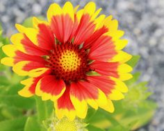 flower yellow and orange