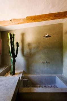 This is different design for a #bathroom. What do you think of the real cactus growing right next to the #bathtub. www.remodelworks.com