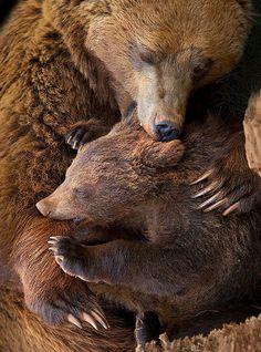 Brown Bear hug (by Marina Cano) Animals And Pets, Baby Animals, Cute Animals, Wild Animals, Funny Animals, Animals Images, Love Bear, Big Bear, Beautiful Creatures
