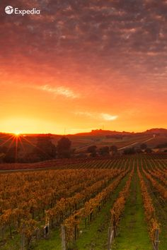 Discover top wineries in Napa and Sonoma and pair your next glass with a breathtaking view. Expedia Viewfinder Travel Blog