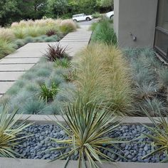 Xeriscaping Design Ideas, Pictures, Remodel, and Decor