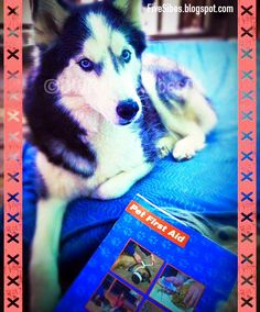 FiveSibes™: Blog the Change: Pet First Aid Awareness