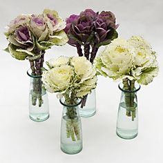 Ornamental Kale, Cabbage or Brassica
