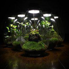 #モスライト#mosslight #LED#Lighting#コケ#moss#terrarium…