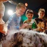 Csütörtöki programok Budapesten a Csodák Palotájában Dogs, Animals, Animales, Animaux, Pet Dogs, Doggies, Animal, Animais
