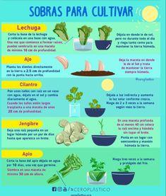 520 Ideas De Plantas En 2021 Cultivo De Plantas Plantas Jardineria Y Plantas