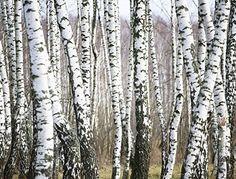 13 Best Pellet Stoves Images Pellet Stove Stove Wood