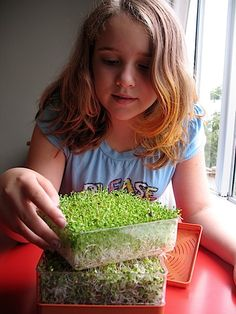 sprouting - seeds/plants unit + tasty!