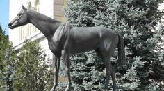 """Kincsem, the Hungarian wonder Kincsem, in Hungarian """"My Precious"""" or """"My Treasure"""" ( March March was the most successful Thoroughbred race horse ever, having won 54 races for Thoroughbred, Horse Racing, Budapest, Bugs, Horses, Animals, Animales, Animaux, Animal"""
