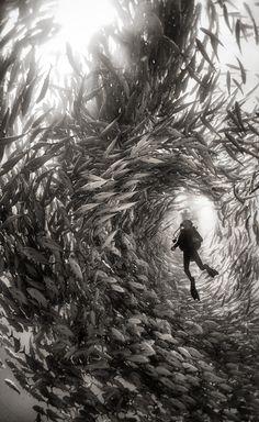UNDERWATER REALM Photographer ANUAR PATJANE