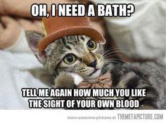 funny cat meme   funny-cat-Wonka-meme