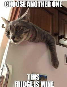 Want this fridge? It´s taken :) Funny Cat Memes, Funny Cats, Hilarious, Animals Beautiful, Adorable Animals, Animal Memes, Cool Cats, Cats And Kittens, Cat Lovers