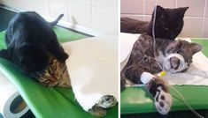 Cat gets second chance at life and uses it to nurse other sick cats to health