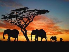 Depois de perder o seu brinquedo preferido, um elefante de pelúcia, um rapazinho estava devastado, até os seus pais engendrarem um plano brilhante. Para consolar o rapaz, inventaram que o seu brinquedo predileto não o tinha abandonado e que andava a viajar pelo mundo.