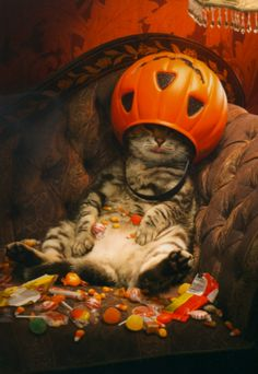 Cute Halloween cat