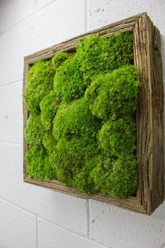 """Long lasting and Maintenance free FlowerBox Preserved Wall Gardens and plants require no water/misting, light or soil, and retain their """"fresh cut"""" state, original vivid color, form & softness for"""