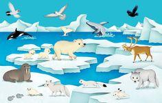 Federica Iossa - Portfolio and Books Artic Animals, Cute Animals, Panda Bear, Polar Bear, North Pole Animals, Continents Activities, Diorama Kids, Polo Norte, Creature Drawings
