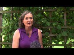 2013 Ontario Faces of Farming interview - Anita Buehner - lavender farmer #norfolkcounty #facesoffarming #lavenderfarming