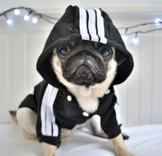 Dress up your Dog with the latest in Pug fashion! Please allow days for… - My Doggy Is Delightful Cute Funny Animals, Cute Baby Animals, Funny Dogs, Animals And Pets, Cute Baby Pugs, Cute Dogs And Puppies, Doggies, Black Pug Puppies, Puppies Tips