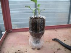 I have done this before with the plastic on top where the condensation waters the seeds.  Works Great!
