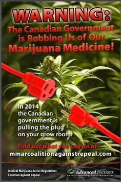 When marijuana growers and users have problems with the government, they usually ask attorneys or marijuana advocacy organizations for help