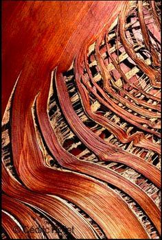Natural Forms, Natural Texture, Patterns In Nature, Textures Patterns, Art Texture, Visual Texture, Wood Texture, Wood Bark, Theme Nature