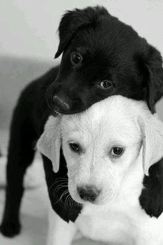 No importa el color , ni la raza siempre hay alguien que te ama !!