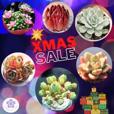 Christmas Sale 2020 for Succulent Lovers