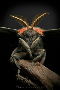 21 Beetles and Insects Photo Gallery - meowlogy Cool Insects, Bugs And Insects, Beautiful Bugs, Beautiful Butterflies, Beautiful Creatures, Animals Beautiful, Macro Fotografie, Mantis Religiosa, Insect Photos