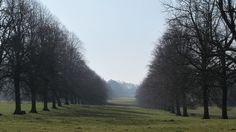 The Avenue of trees in the Park.