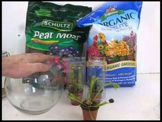 http://www.stormthecastle.com/terrarium/venus-flytraps.htm  All About Venus Fly Traps, including a close up of feeding one. I show you how to transplant them, feed them, and care for them. A complete guide to starting out with a venus fly trap. They can be a bit tricky and there are a few things you should know to keep your flytrap happy and heal...