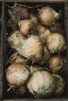 Onions by julie marie craig, via Flickr