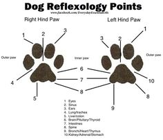 dog reflexology map - Yahoo Search Results