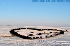 A rancher fed his cattle in the shape of a heart on Valentine's Day for his wife.