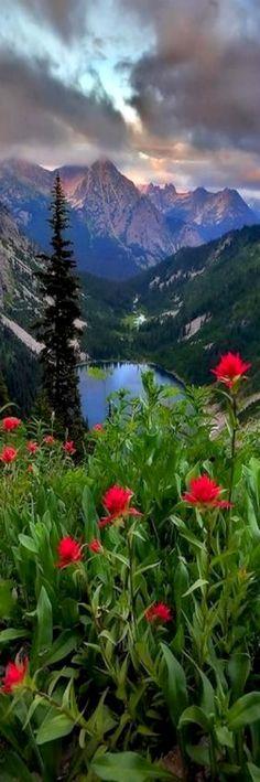All sizes | Alpine Treasure | Flickr - Photo Sharing!