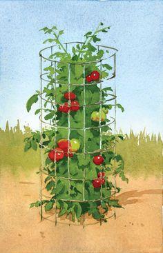 Wire Mesh Tomato Cage