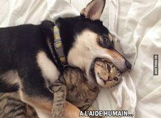 A l'aide humain...