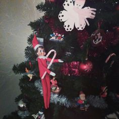Elf on the shelf: he's stealing our candy canes!