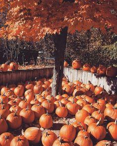 Fall Pictures, Fall Photos, Casa Halloween, Thanksgiving Wallpaper, Autumn Aesthetic, Cozy Aesthetic, Orange Aesthetic, Autumn Cozy, Autumn Witch