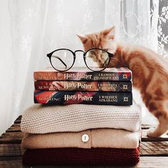 Harry Potter - latest Harry Potter images, iconic movie quotes on We Heart It Slytherin, Hogwarts, Autumn Aesthetic, Book Aesthetic, Pic Tumblr, Harry Potter Aesthetic, We Are The World, Book Photography, I Love Books