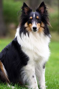 """If you have something to bark, bark it!"" #dogs #pets #Shelties  Facebook.com/sodoggonefunny"