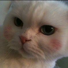 제가아는 언니의 고양이 입니닷 고양이 너무좋아서