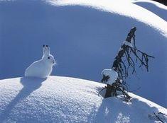 Miten eläimet selviytyvät talvesta?