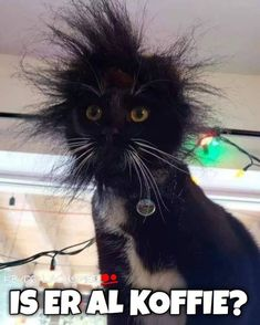 Listen to Frazzled Cat - LOLcats is the best place to find and submit funny cat memes and other silly cat materials to share with the world. We find the funny cats that make you LOL so that you don't have to. Ugly Animals, Cute Funny Animals, Animals And Pets, Cute Cats, Cute Jokes, Funny Cute, Pretty Cats, Beautiful Cats, Silly Cats
