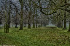 Bushy Park - London ©MARCBOGMAN.COM London, Park, Plants, Photography, Photograph, Parks, Photo Shoot, Plant, Fotografie