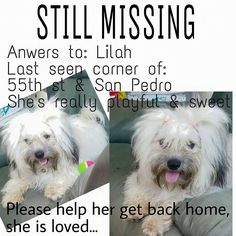 Dpdg Dpdg‎Lost and Found Dogs -Maltese, Bichon, Pomeranian & Other Small Breeds 3 hrs ·     Day 10 and still no news  we just want her home safe, she was stolen June 4th and she's like a baby to my mom, please if uu have her have a heart she's not just and animal to us, she's family
