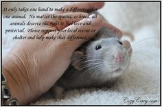 Love for all animals.