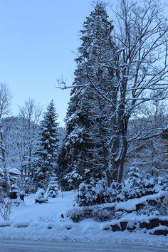 Paysage enneigé au Chalet RoyAlp Hôtel & Spa! Le Havre, Spa, Alps, Switzerland, Winter