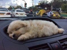 Sleepy Sleepy - #fun | Best Pictures & Quotes